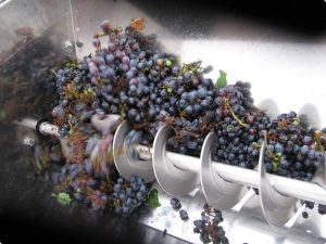 grapes being grind as part of the wine making process.