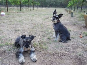 The dogs Cabo and Tristan alert when guests arrive to the Westcave Cellars Winery
